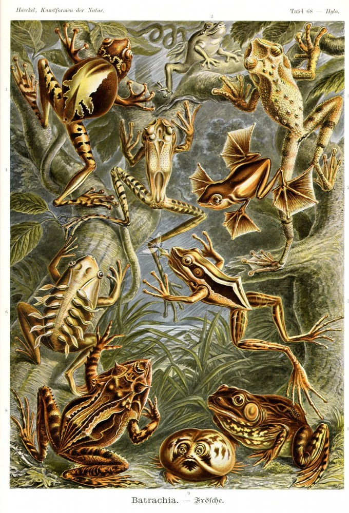 Animal - Reptile like - Frog - Educational plate