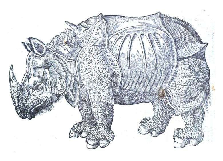 Animal - Rhinocerous - Durher