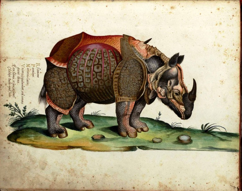 Animal - Rhinocerous - Italian -  (2)
