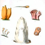 Animal - Seashell - Popular British Conchology  (3)