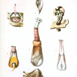 Animal - Seashell - Popular British Conchology  (5)