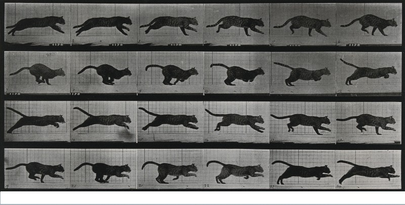 Animal – Stop motion – Cat – Running – Stop motion | Vintage ...