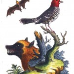 Animal - Woodland - Bird, bat and weasel