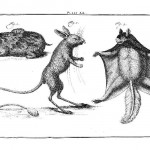 Animal - Woodland - Moles, rabbits, bats