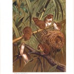 Animal - Woodland - Mouse - Harvest