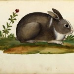 Animal - Woodland - Rabbit - Italian (1)