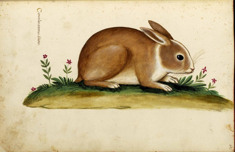 Animal - Woodland - Rabbit - Italian (2)