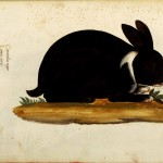 Animal - Woodland - Rabbit - Italian (3)