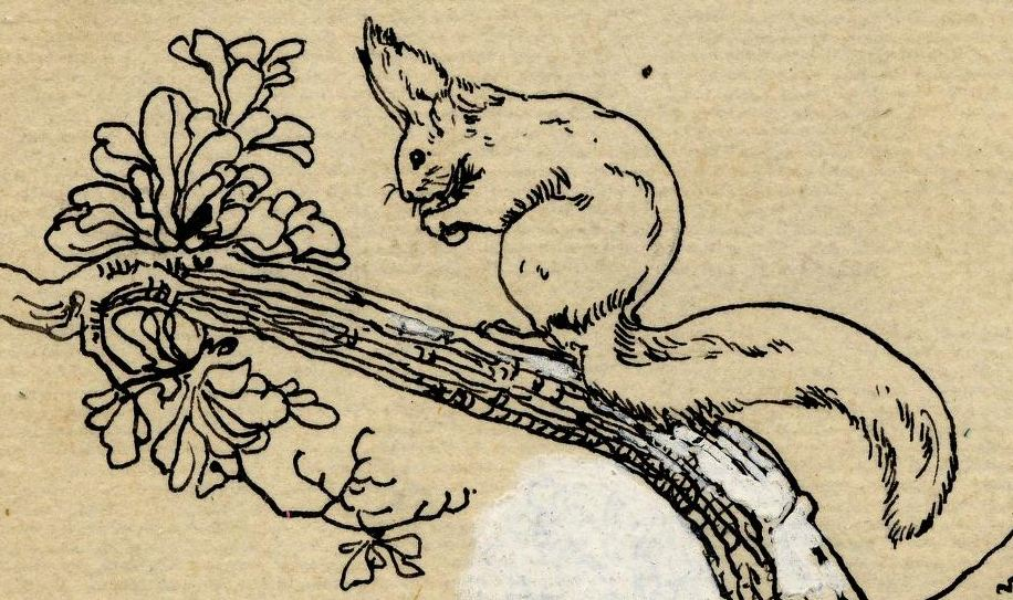 Line Drawings Of Woodland Animals : Animal woodland squirrel line drawing vintage
