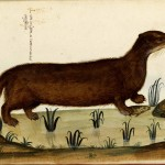Animal - Woodland - Weasel - Italian