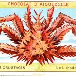 Art - Advertisement - Chocolat d'Aiguebelle - Crab 2