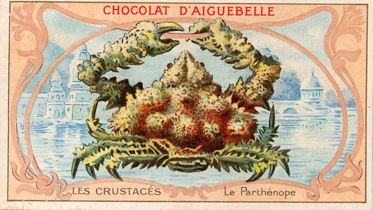 Art - Advertisement - Chocolat d'Aiguebelle - Crab