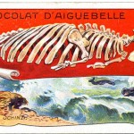 Art - Advertisement - Chocolat d'Aiguebelle - Fossil
