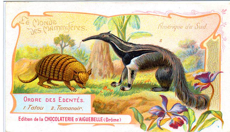 Art - Advertisement - Le Monde de Mammiferes - Armadillo and anteater