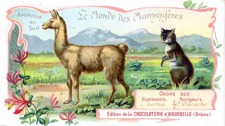 Art - Advertisement - Le Monde de Mammiferes - Llama and chinchilla