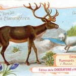 Art - Advertisement - Le Monde de Mammiferes - Reindeer and arctic fox