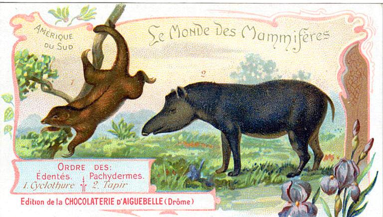 Art - Advertisement - Le Monde de Mammiferes - Tapir and sloth