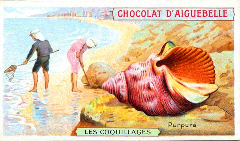 Art - Advertisement - Seashell
