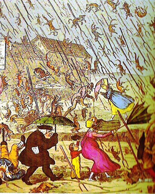 Art - Aphorisms - Raining Cats - French - Cartoon