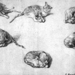 Art - Drawing - Animal - Cat - Gainsborough