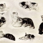 Art - Drawing - Animal - Cat - Knip (2)