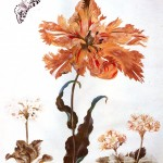 Art - Painting - Butterfly around coral colored Dutch Tulip