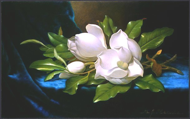 Art - Painting - NGA Martin Johnson heade, Giant Magnolias on a Blue Velvet Cloth, c. 1890