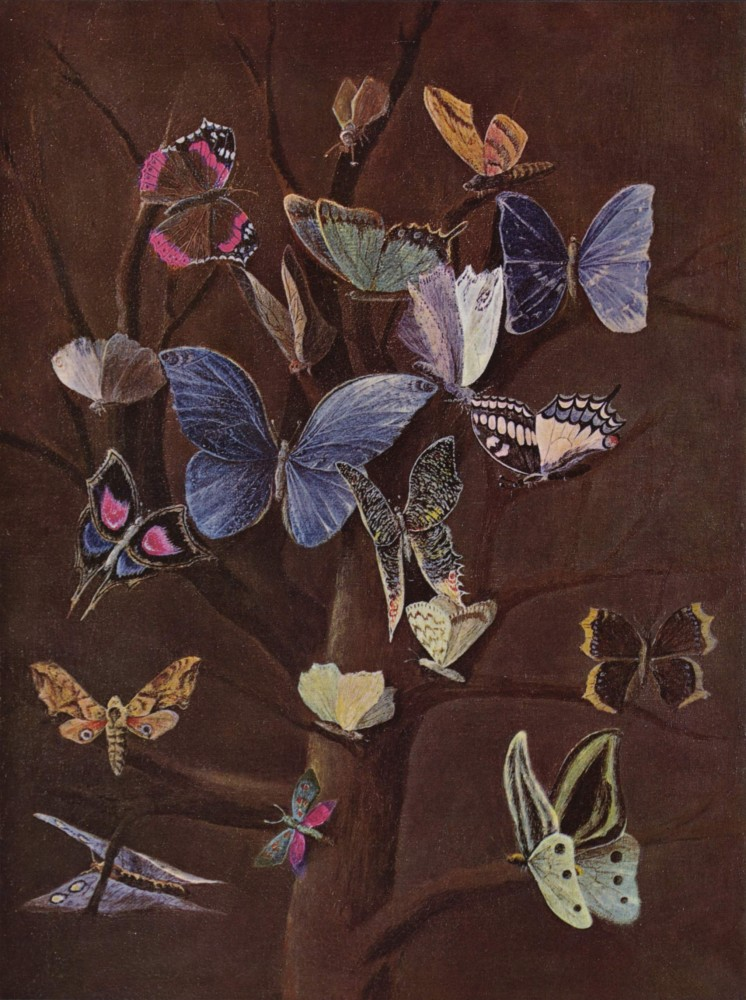 Art - Painting - Purple butterflies against brown background