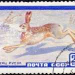 Art - Stamp Art - Animal - Russia - Rabbit - Заяц_русак