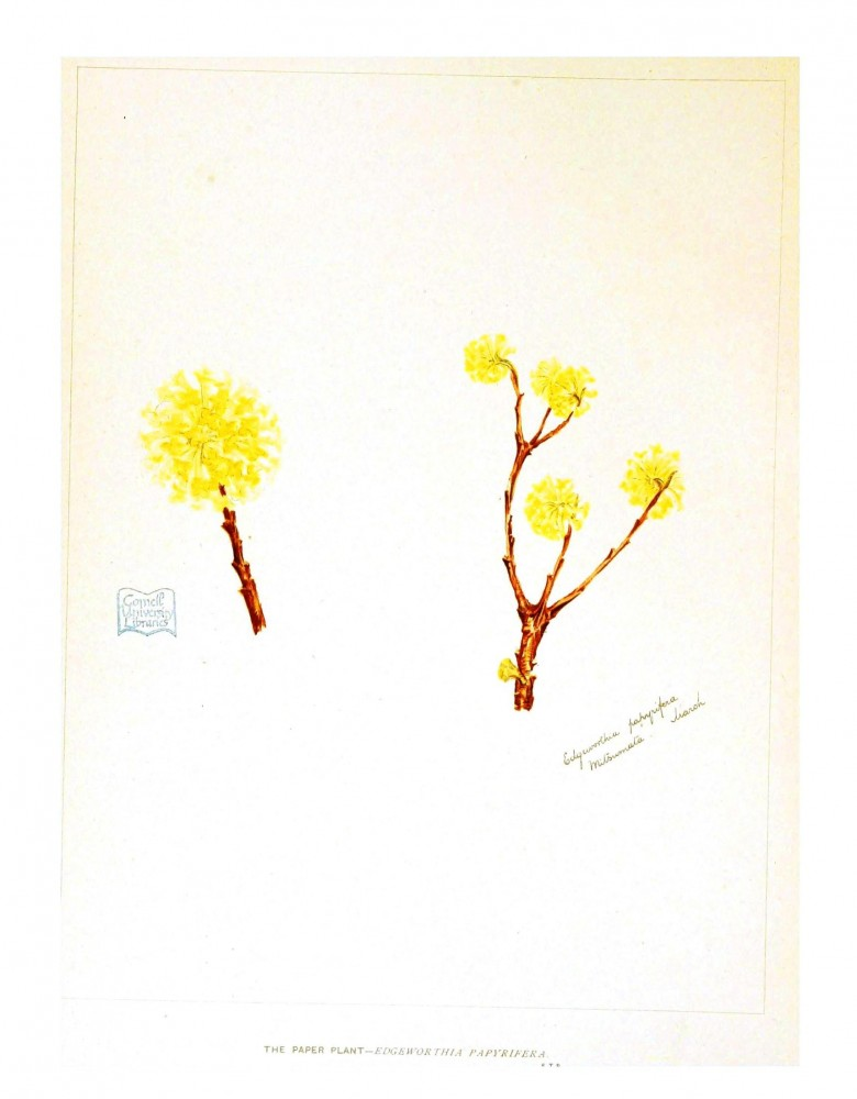 Botanical - Asian - Floral design - The garden of Japan - yellow flowers