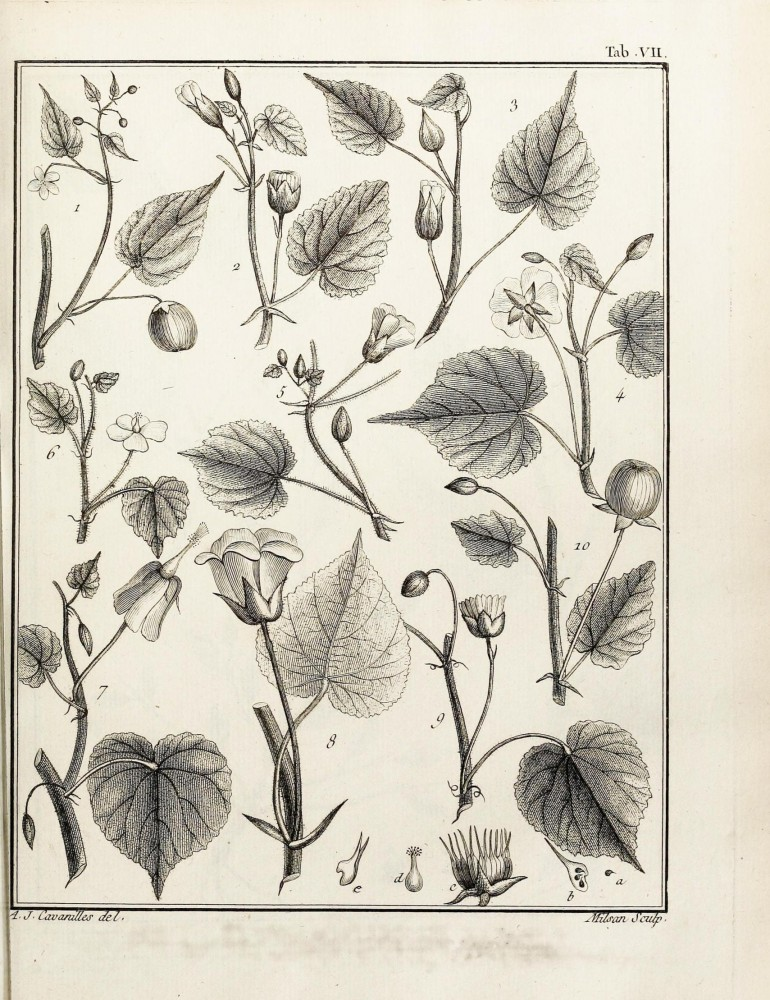 Botanical - Black and white - Educational plate - Leaf classifications (2)