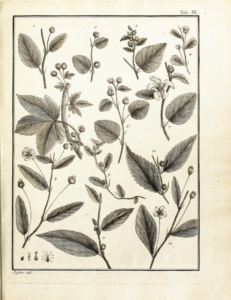 Botanical - Black and white - Educational plate - Leaf classifications (3)