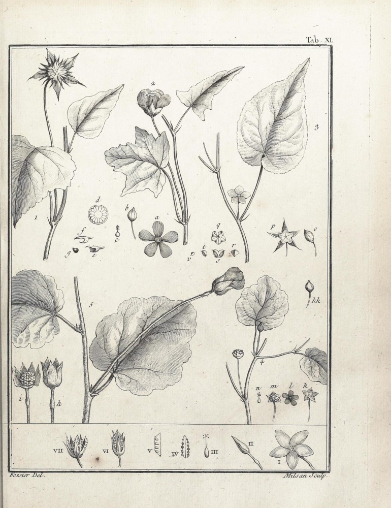 Botanical - Black and white - Educational plate - Leaf classifications (7)