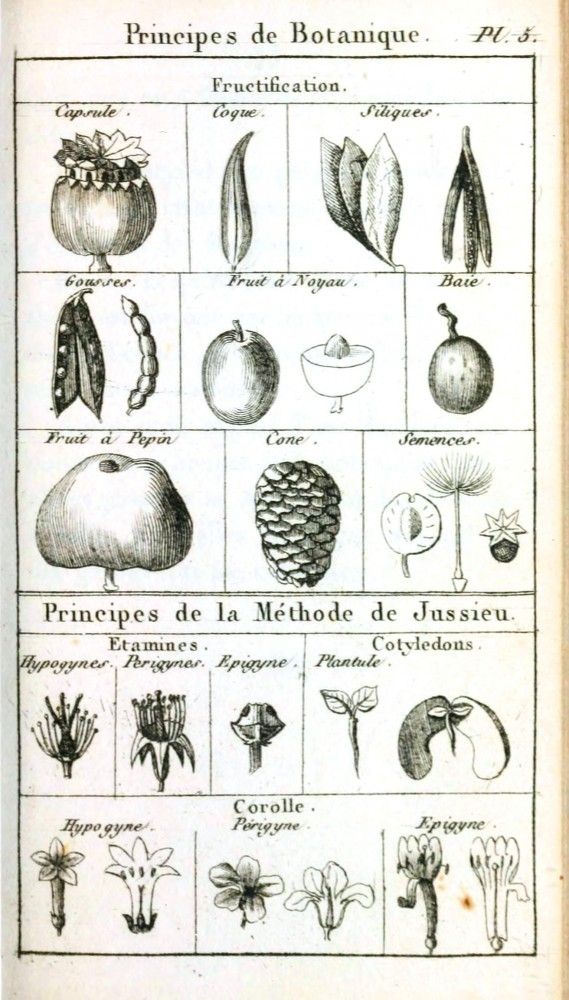 Botanical - Black and white - Line Drawing - Botanique de la Jeunesse -  (4)