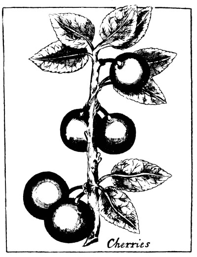 Botanical - Black and white - Line Drawing - Cherries