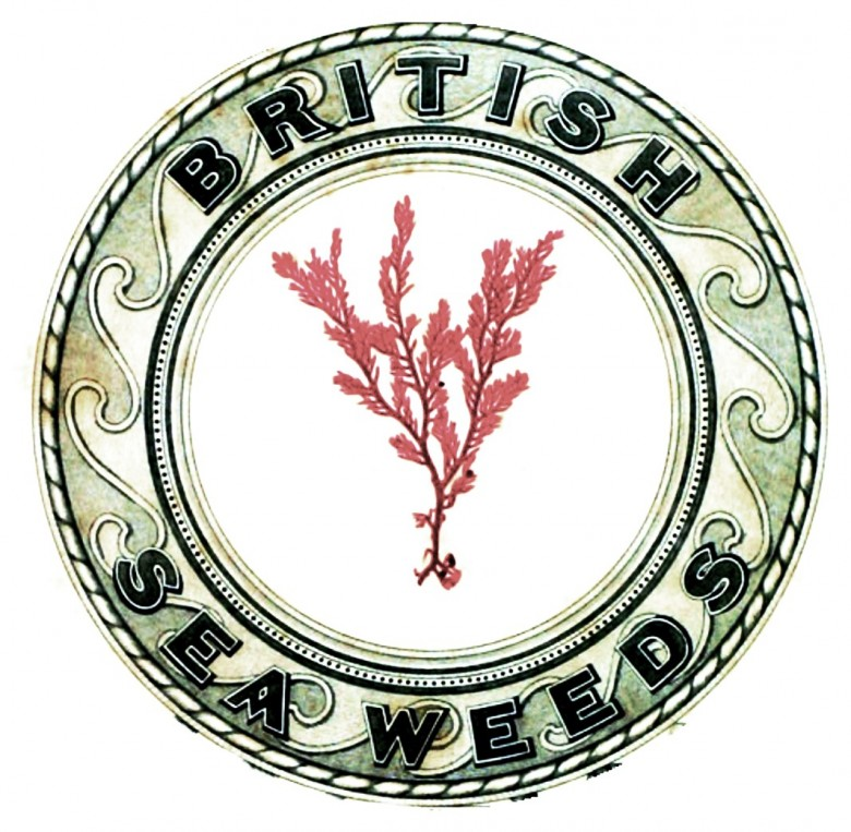 Botanical - British sea weed emblem