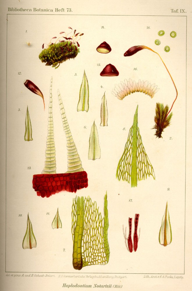 Botanical - Bryologica atlantica 1910 - Mosses, lichens, and liverwarts -  (3)