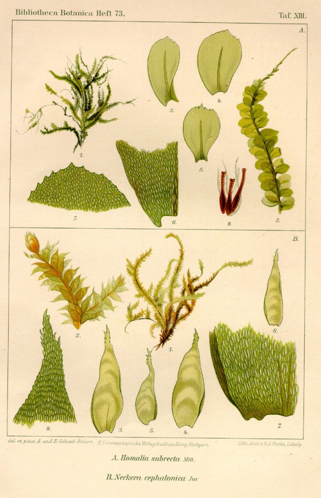 Botanical - Bryologica atlantica 1910 - Mosses, lichens, and liverwarts -  (4)
