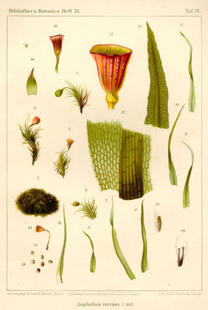 Botanical - Bryologica atlantica 1910 - Mosses, lichens, and liverwarts -  (6)