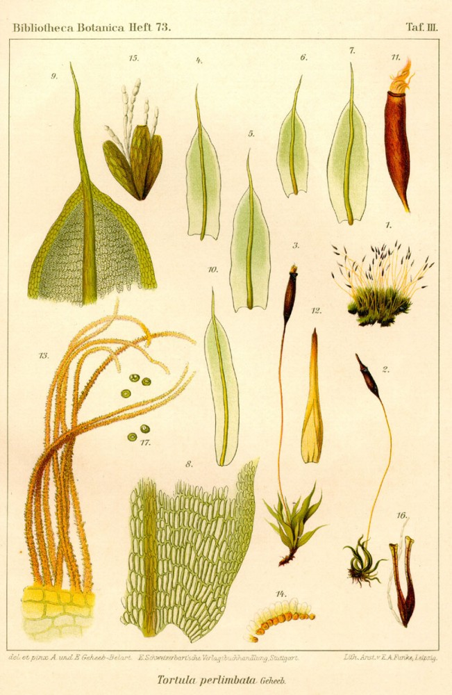 Botanical - Bryologica atlantica 1910 - Mosses, lichens, and liverwarts -  (9)