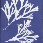 Botanical - Cyanotype - (22)