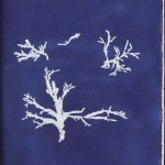 Botanical - Cyanotype - (4)