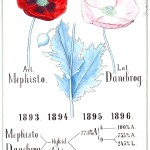 Botanical - Educational plate - Poppy genetics