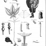 Botanical - Educational plate - Table of Natural History