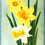 Botanical - Flower - Daffodils - Advertisement 1913