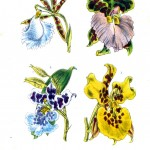 Botanical - Flower - Orchid - Blue and yellow