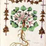 Botanical - Flowering plant - Italian (2)