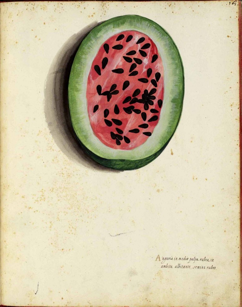 Botanical - Fruit - Watermelon - Italian