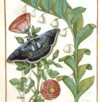 Botanical - Medieval - Flowering plant with butterfly