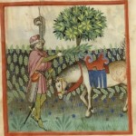 Botanical - Medieval -  Horticultural practices -  (12)